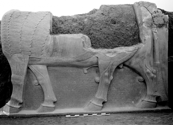 Winged bull (lamassu) from the Neo-Assyrian period, one of a pair of sculptures discovered by the Polish archaeological mission.